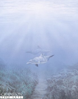 SC2. Dolphins by Fraser Shaw. <p> As the sun breaks through the clear blue waters, two dolphins swim above the seabed.<b><p> Open edition print. <p> Image size 14 inches x 22 inches (36cm x 56cm)